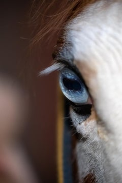 "The Gaze (42 x 36"") - Album: Stallion - Horses"