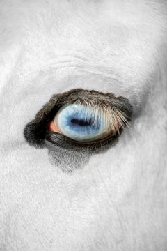 """The Eye Witness (36 x 24"""") - Album: Stallion - Horses"""