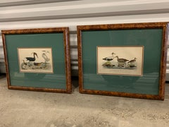 Lithograph Framed of Water Fowl,  A. Wilson and W.H.Lizars , a pair