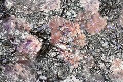 Mitosis 2 Pink & Black Extra Large Abstract Nature Bio Exploration Acrylic Print