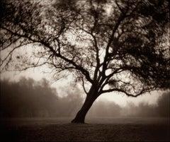 Tree, Goethe Park, Sacramento California