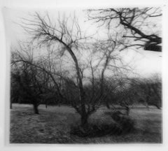 Les Vergers III, Black and white Photograph on transparent silk , double image