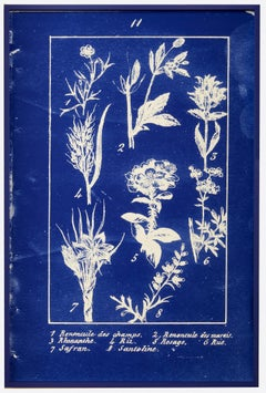 Plate 11, Novelle Botanique, diazotype custom blue frame