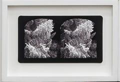Ruin Gazing No: 025 In the Garden at Dundee Scotland, framed stereoscopic card