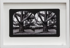 Ruin Gazing,  Cedrus Deodara,  stereoscopic card framed