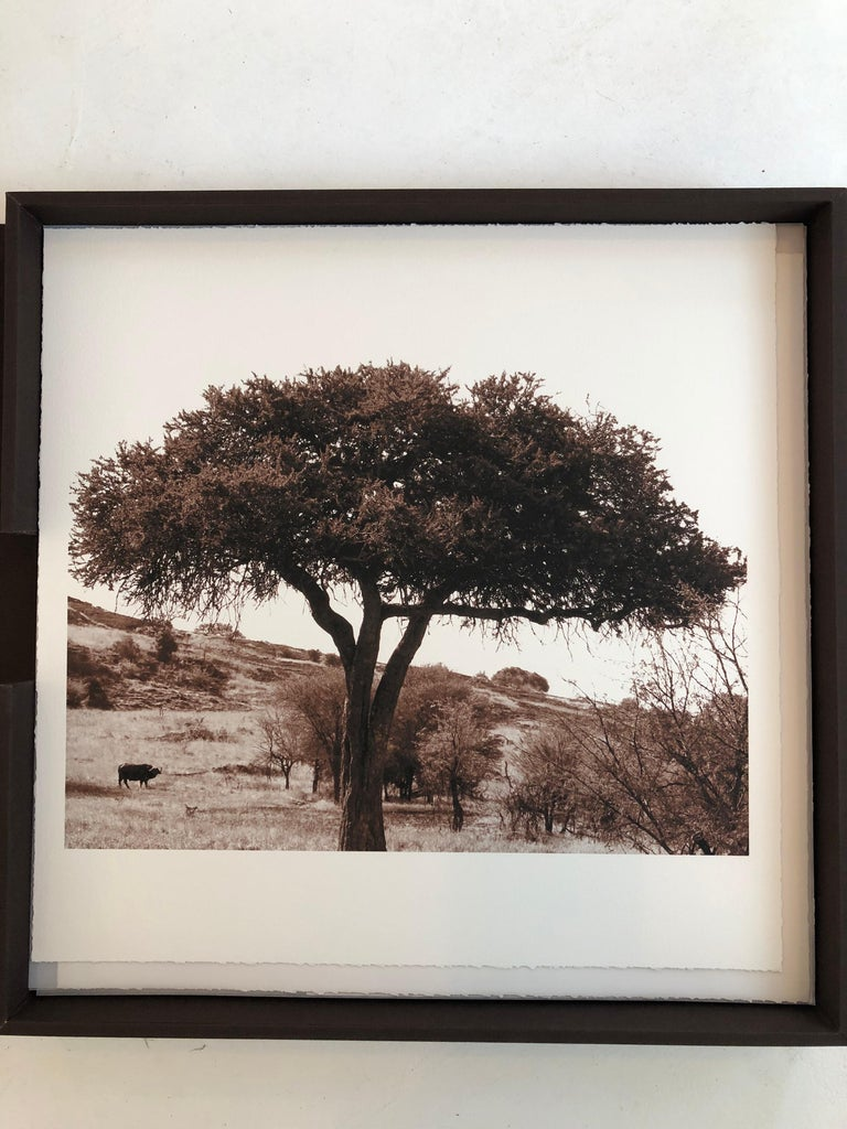 """John H. Brown, Jr. Landscape Photograph - """"African Tree Series #8"""" - Sepia Toned Photograph of Tree from the Serengeti"""