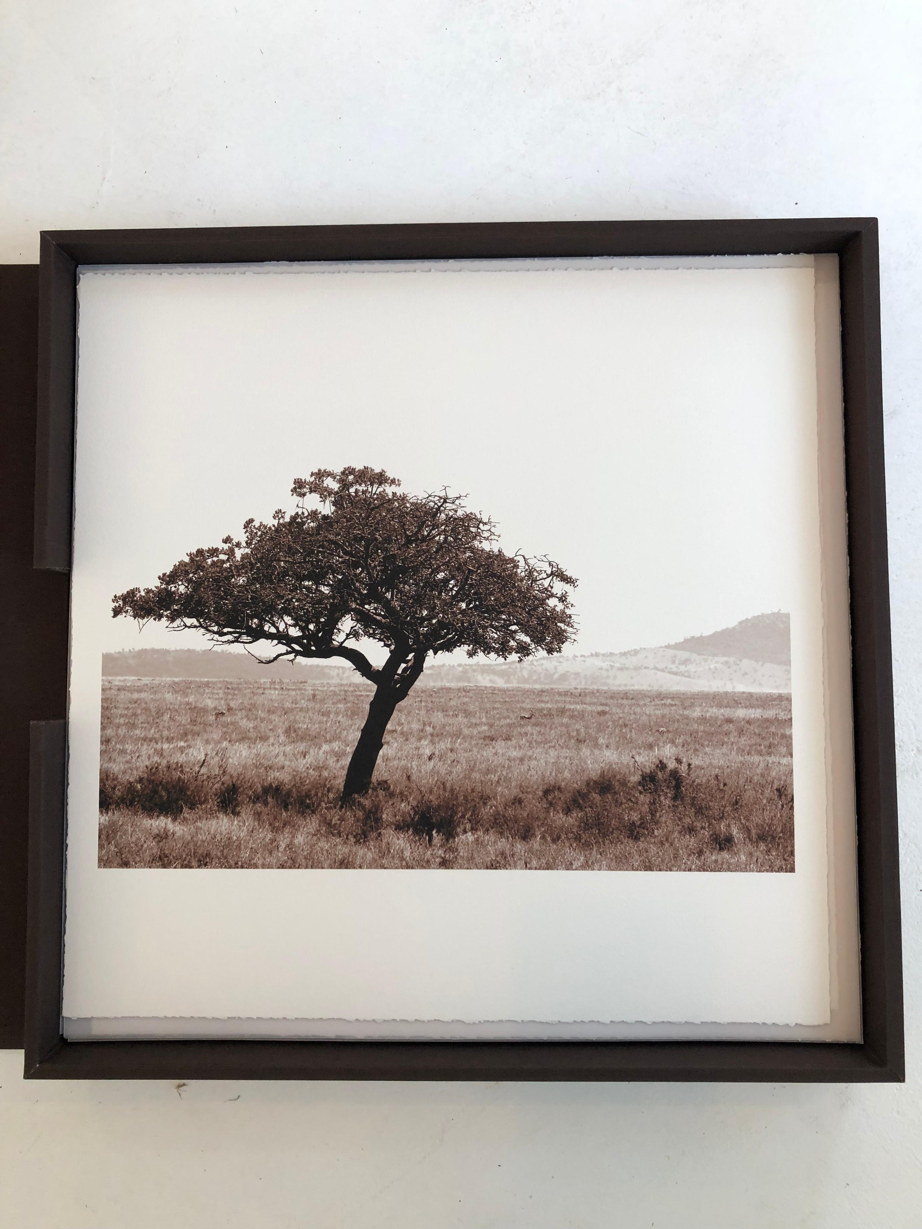 """""""African Tree Series - #6"""" Sepia Toned photograph of tree from Serengeti"""