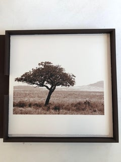 """African Tree Series - #6"" Sepia Toned photograph of tree from Serengeti"