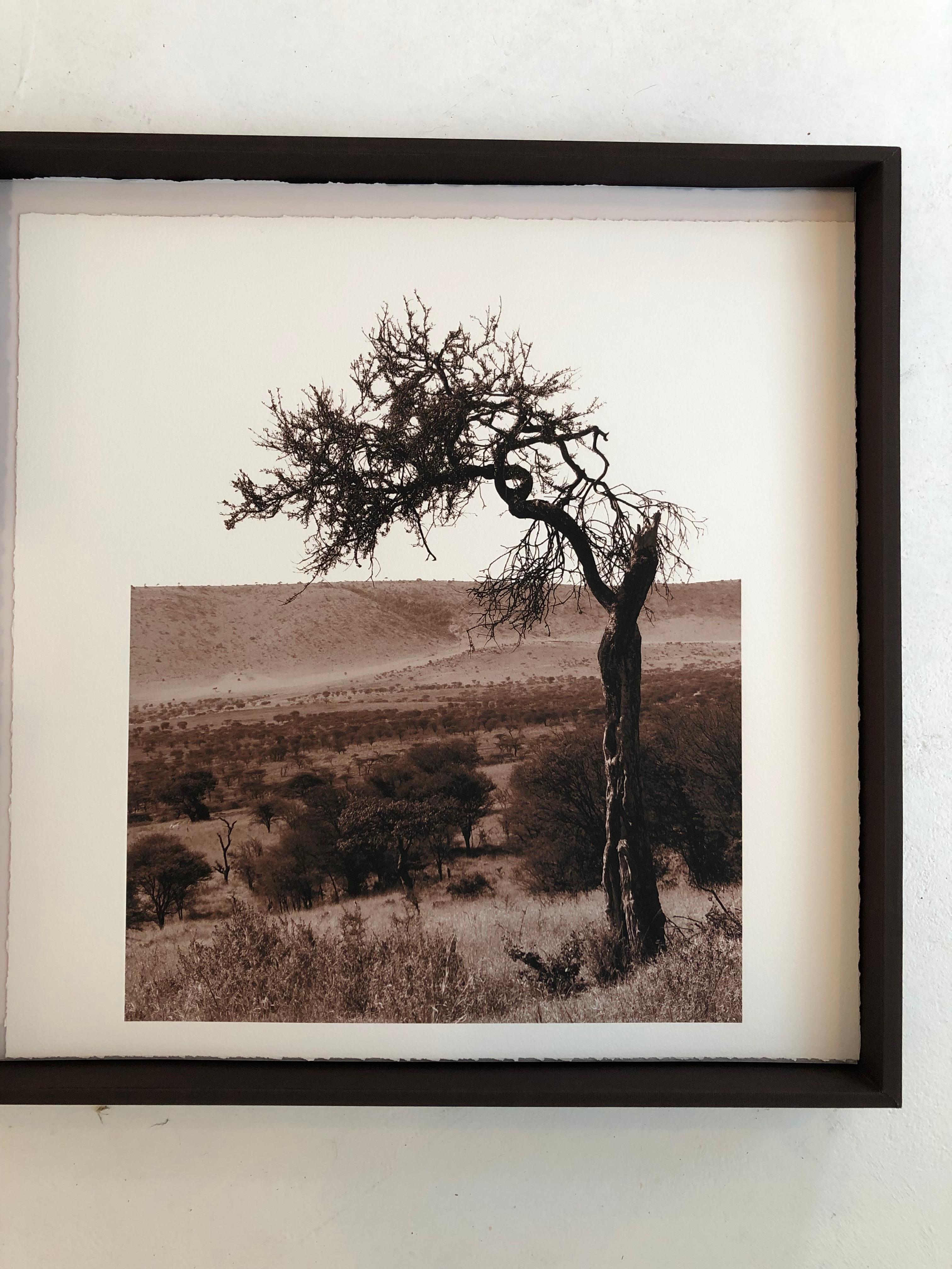 """African Tree series #4"" - Sepia Toned photograph of Serengeti tree"