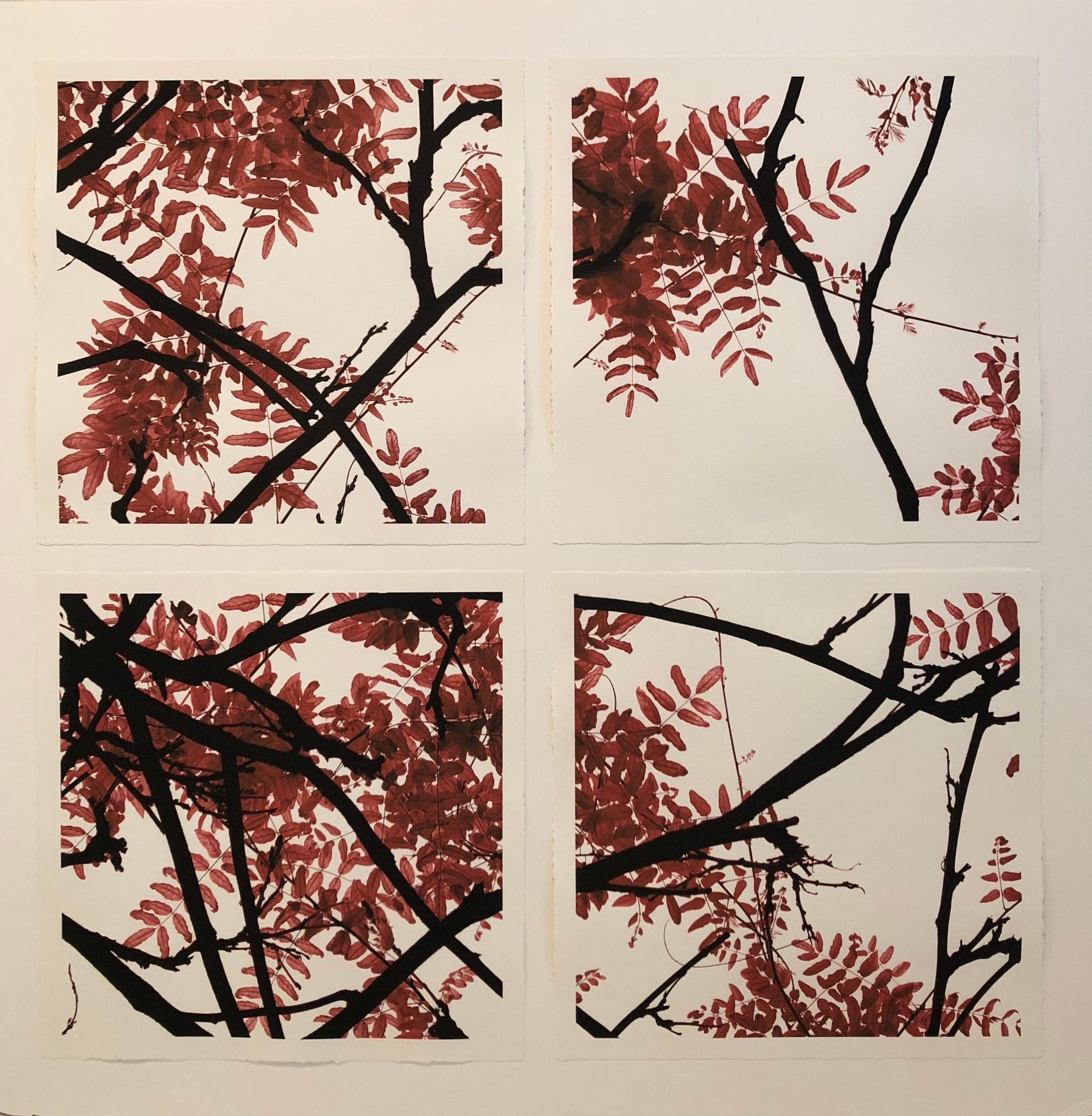 """""""The Vine Series - Fall"""" - Grid of 4 photographs tinted in red sienna"""