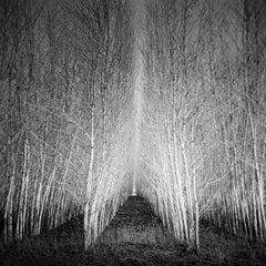 Populus Forest, Austria - Black and White Large Format Fine Art Film Photography
