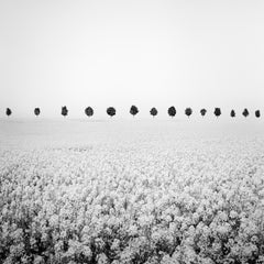 Brassica Napus Study 1, France - Black and White Fine Art Landscapes Photography