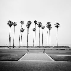 Palm Tree Study #1, California, USA - Black and White Fine Art Photography