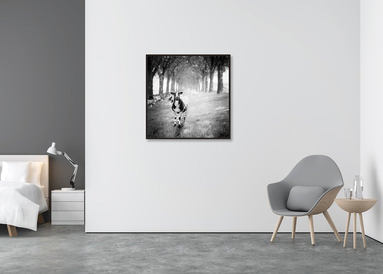 Shaun the Sheep Study 2, Netherlands - Black and White Fine Art Film Photography For Sale 1