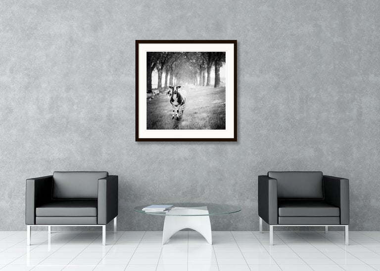 Shaun the Sheep Study 2, Netherlands - Black and White Fine Art Film Photography For Sale 2