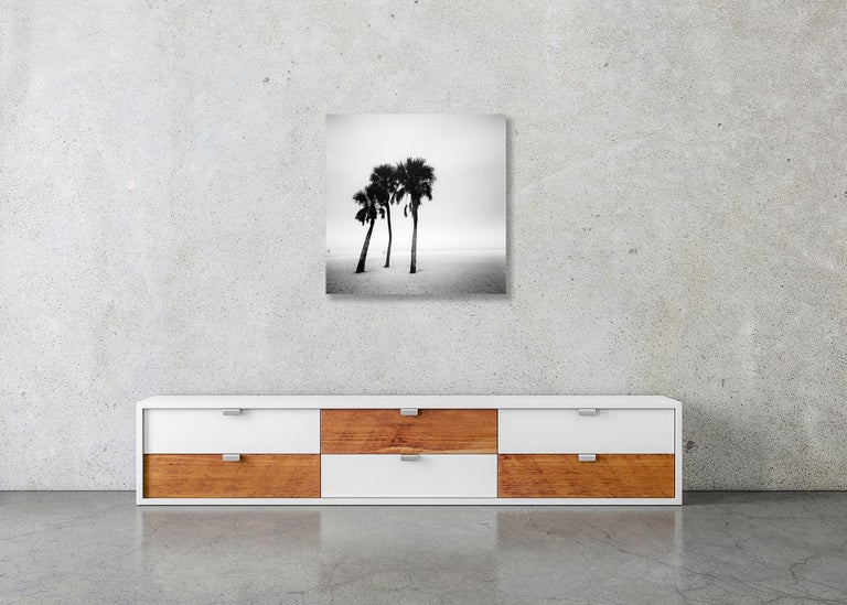 Palm Beach Study #1, Florida, USA - Black and White Fine Art Photography For Sale 2