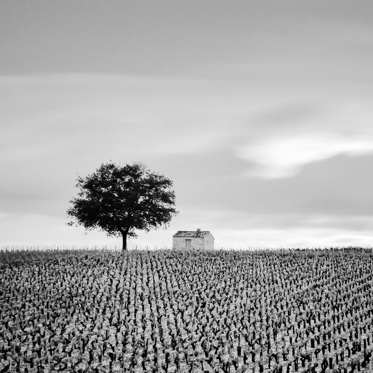 Champagne Paradise, France - Black and White Fine Art Photography - Gray Black and White Photograph by SILVERFINEART