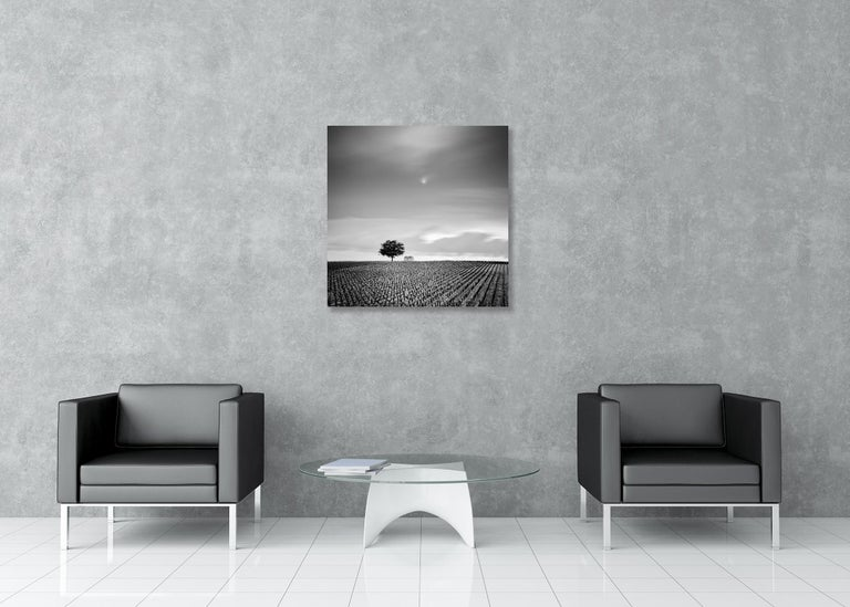 Champagne Paradise, France - Black and White Fine Art Photography For Sale 1