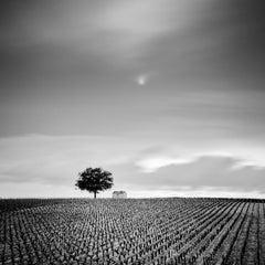 Champagne Paradise, Vineyards, France - Black and White Fine Art Photography