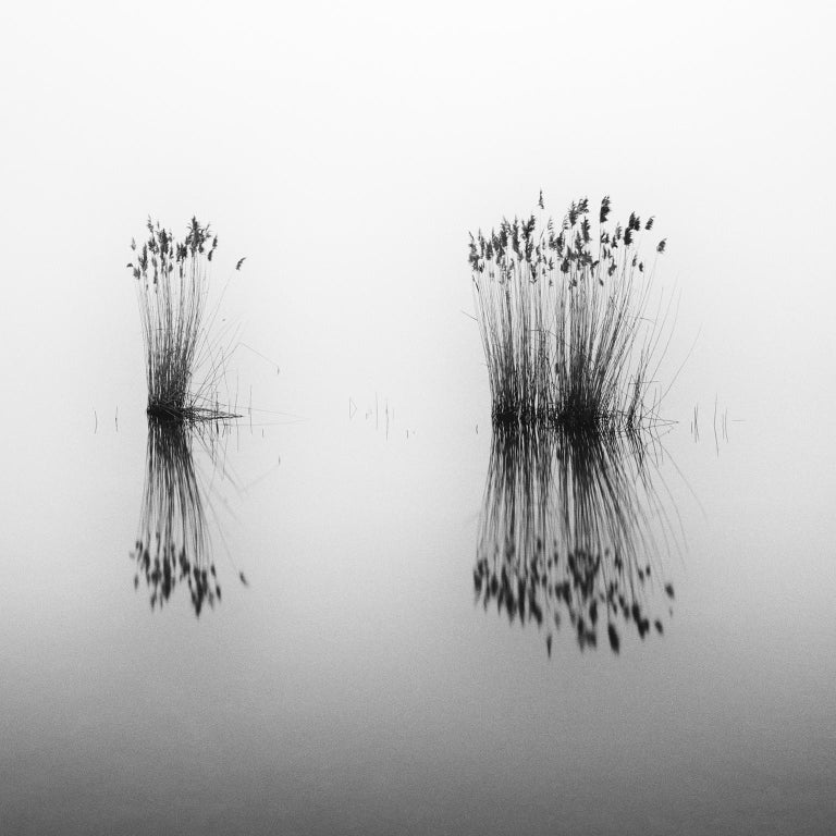 Phragmites Study #1, Hungary - Black and White Fine Art Photography - Gray Black and White Photograph by SILVERFINEART