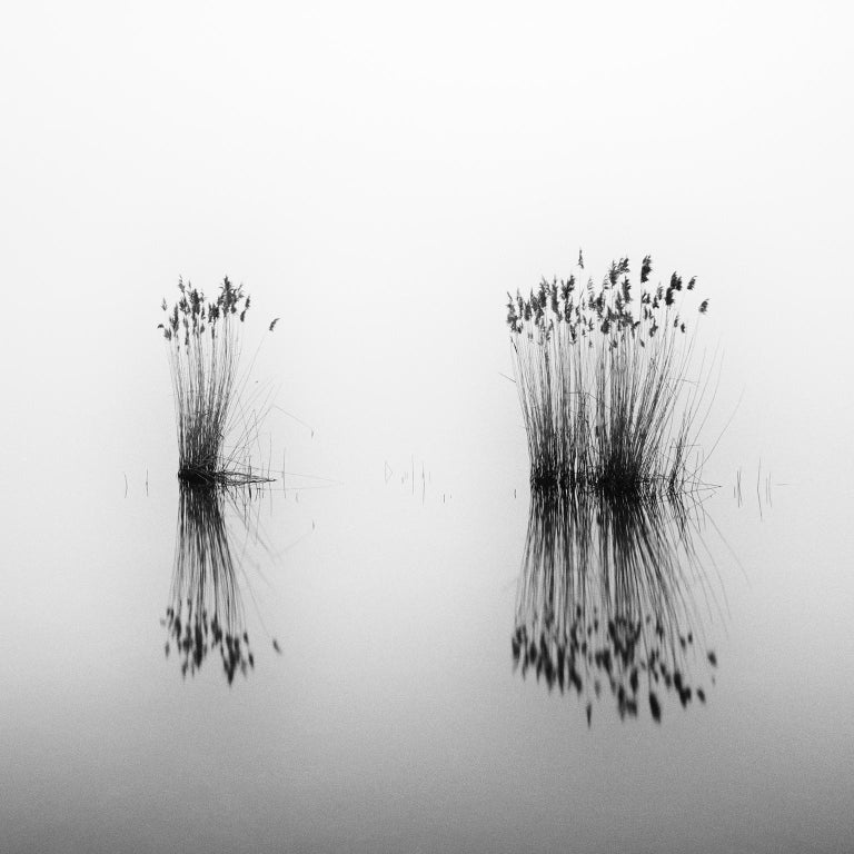 Phragmites Study 1, Hungary - Black and White Long Exposure Fine Art Photography - Gray Black and White Photograph by SILVERFINEART