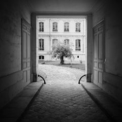 Tree in the Courtyard, Paris, France - Black and White Fine Art Photography