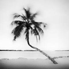 Bent Palm, Beach, Florida, USA, black and white fine art photography landscape