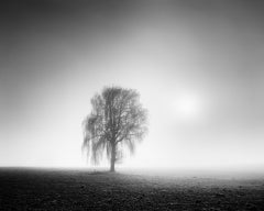Foggy Morning Study 2, Tree, Austria - Black and White Fine Art Photography