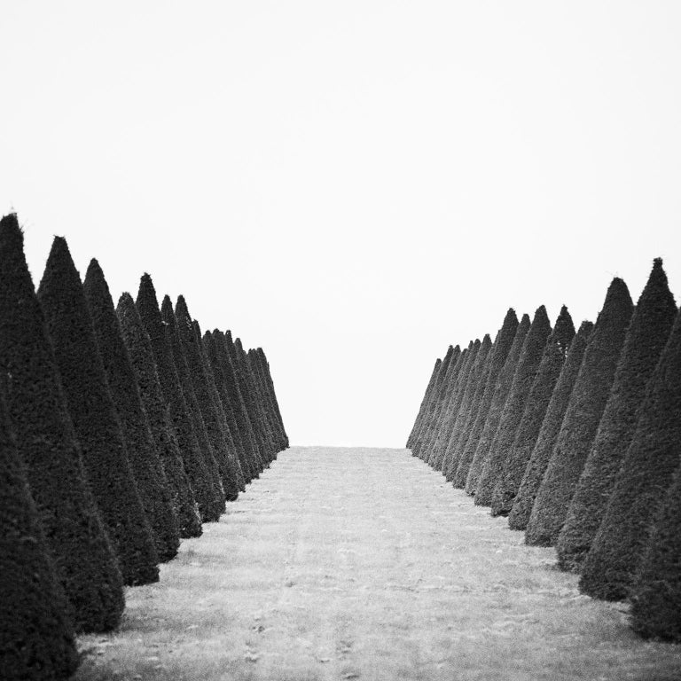 Hedges Study 4, Versailles, Paris, France - Black and White Fine Art Photography - Gray Black and White Photograph by Gerald Berghammer, Ina Forstinger