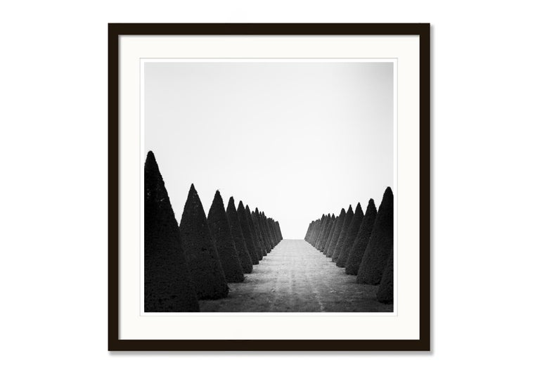 Hedges Study 4, Versailles, Paris, France - Black and White Fine Art Photography For Sale 2