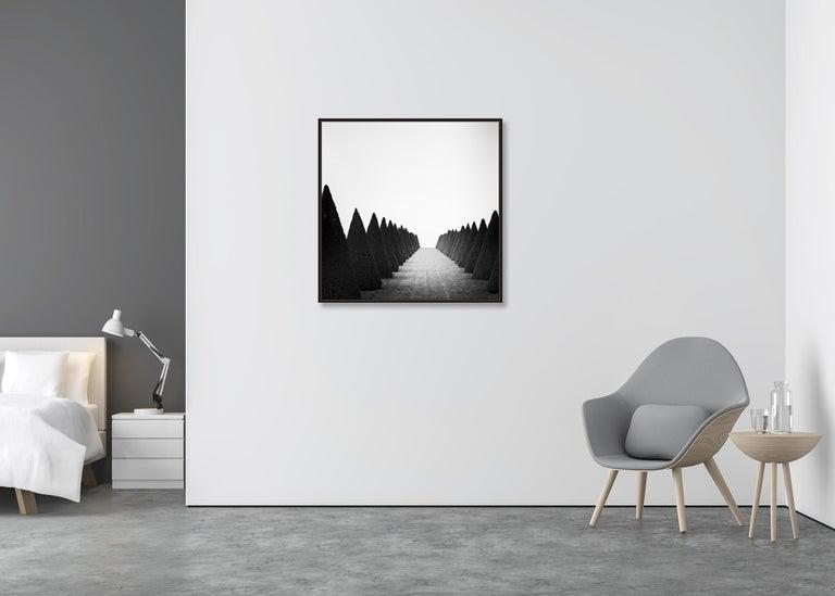 Hedges Study 4, Versailles, Paris, France - Black and White Fine Art Photography For Sale 1