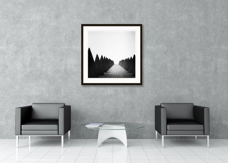 Hedges Study 4, Versailles, Paris, France - Black and White Fine Art Photography For Sale 3