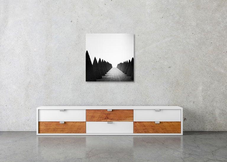 Hedges Study 4, Versailles, Paris, France - Black and White Fine Art Photography For Sale 4