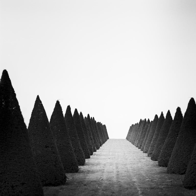Gerald Berghammer, Ina Forstinger Black and White Photograph - Hedges Study 4, Versailles, Paris, France - Black and White Fine Art Photography