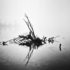 Fallen Tree Study 1, Almsee, Austria - Black and White Fine Art Film Photography