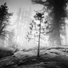 Into the Wild, California, Redwood, USA - Black and White Fine Art Photography
