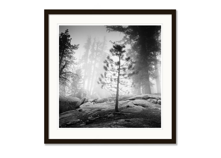 Into the Wild, California, Redwood, USA - Black and White Fine Art Photography For Sale 2