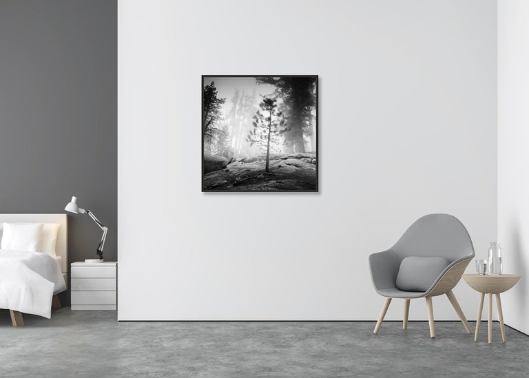 Into the Wild, California, Redwood, USA - Black and White Fine Art Photography For Sale 1