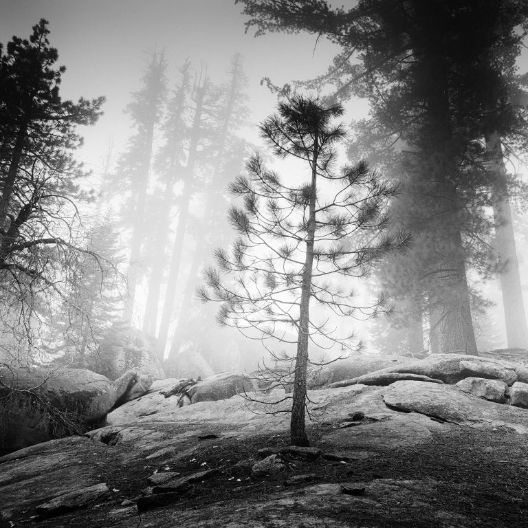 Gerald Berghammer, Ina Forstinger Black and White Photograph - Into the Wild, California, Redwood, USA - Black and White Fine Art Photography