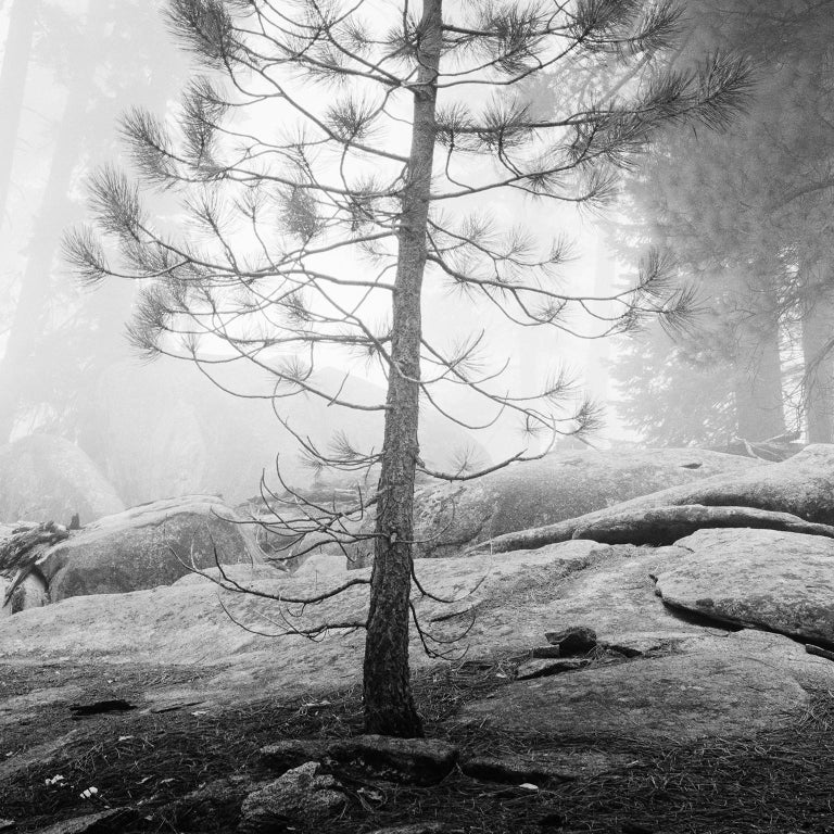 Into the Wild, California, Redwood, USA - Black and White Fine Art Photography - Gray Black and White Photograph by Gerald Berghammer, Ina Forstinger