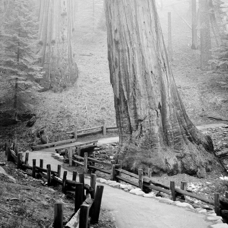Redwood Study 1, California, USA - Black and White Fine Art Film Photography - Gray Black and White Photograph by Gerald Berghammer, Ina Forstinger