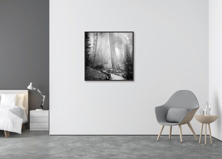 Redwood Study 1, California, USA - Black and White Fine Art Film Photography For Sale 1