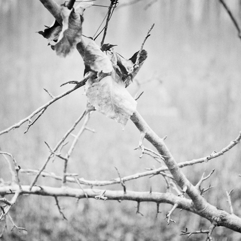 Branch and leaf, Austria - Black and White fine art analogue film photography - Photograph by Gerald Berghammer