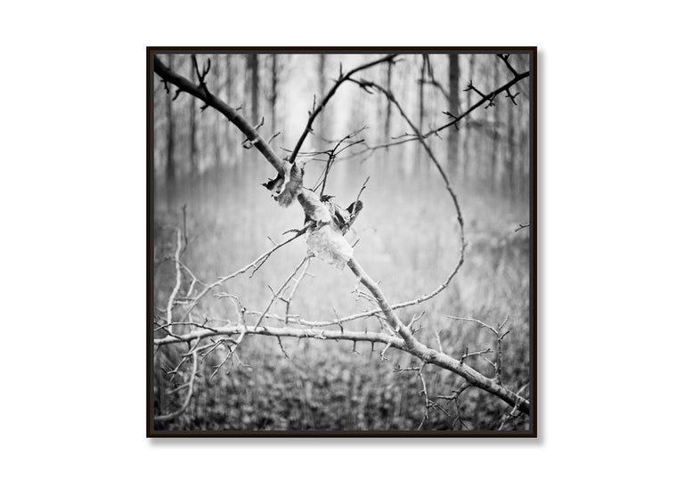 Branch and leaf, Austria - Black and White fine art analogue film photography - Contemporary Photograph by Gerald Berghammer