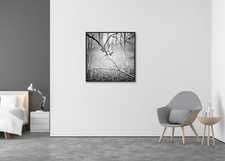 Branch and leaf, Austria - Black and White fine art analogue film photography - Gray Landscape Photograph by Gerald Berghammer