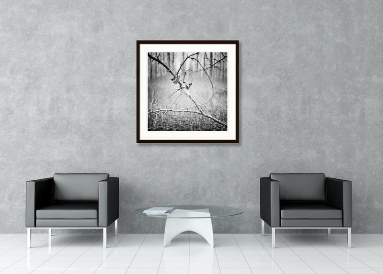 Branch and leaf, Austria - Black and White fine art analogue film photography For Sale 1