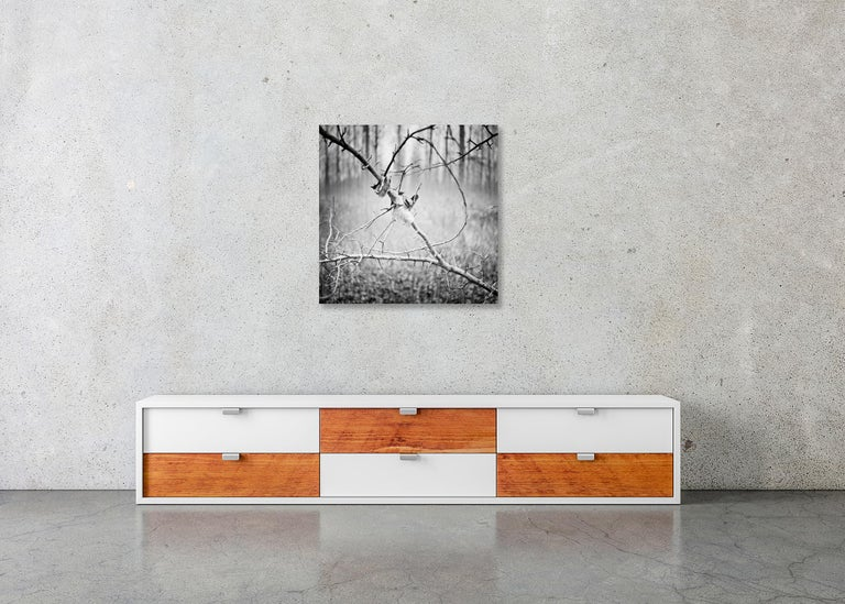 Branch and leaf, Austria - Black and White fine art analogue film photography For Sale 2