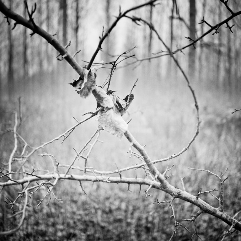 Gerald Berghammer Landscape Photograph - Branch and leaf, Austria - Black and White fine art analogue film photography