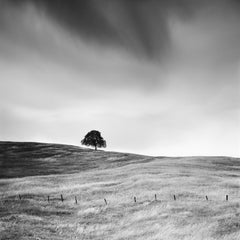 Tree in the golden Grass, California, USA - Black & White landscape photography