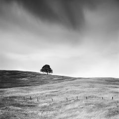 Tree in the golden Grass, California, USA  black and white landscape photography